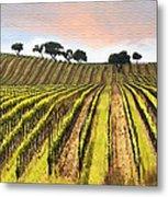 Spring Vineyard Metal Print by Sharon Foster
