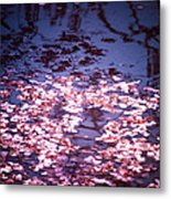 Spring's Embers - Cherry Blossom Petals On The Surface Of A Pond Metal Print by Vivienne Gucwa