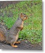Squirrel Metal Print by Linda Larson