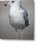 Standing Seagull Metal Print by Carol Groenen