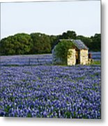 Stone Shed In Field Of Bluebonnets Metal Print by Jeremy Woodhouse