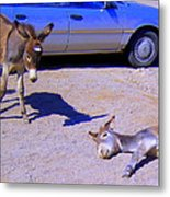 Stop Don't Feed Me Or I Will Get A Belly Ache Metal Print by Lessandra Grimley