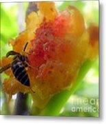 Succulent Fig Metal Print by Karen Wiles