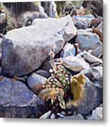 Summer Streambed Metal Print by Sharon Freeman