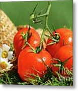 Summer Tomatoes Metal Print by Sandra Cunningham