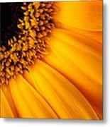 Sun Burst - Sunflower Metal Print by Martin Williams