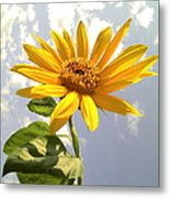Sunflower Metal Print by Marilyn Sargent