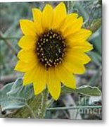 Sunflower Smile Metal Print by Sara  Mayer