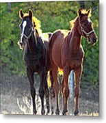 'sunlight Babies' Metal Print by PJQandFriends Photography