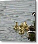Swimming Lessons Metal Print by Heather Applegate