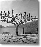 sycamore trees in Ascona - Ticino Metal Print by Joana Kruse