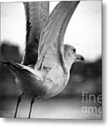 Take Off Metal Print by Jenn Bodro