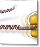 Telomere And Telomerase, Artwork Metal Print by Art For Science