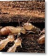 Termites Metal Print by George Grall