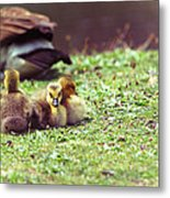 The First Family Metal Print by Karol Livote