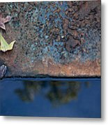 The Garden Pond Metal Print by Steven Gray