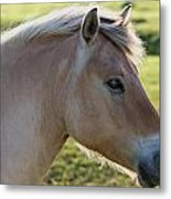 The Horse And The Fly Metal Print by Gert Lavsen