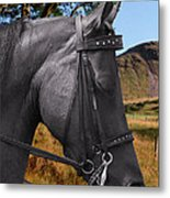The Horse - God's Gift To Man Metal Print by Christine Till