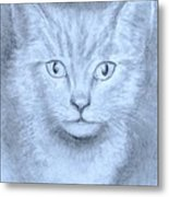 The Kitten Metal Print by Jack Skinner