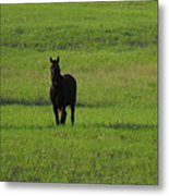 The Lone Horse Metal Print by Rebecca Cearley