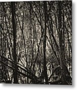 The Mangrove Metal Print by Armando Perez