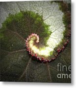 The Middle Path Metal Print by C E Dyer