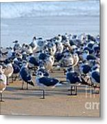 The Monday Morning Meeting Metal Print by Susanne Van Hulst