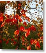 The Reds Of Autumn Metal Print by Julie Dant