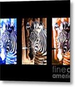 The Three Zebras Black Borders Metal Print by Rebecca Margraf