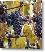 The Vineyard Metal Print by Linda Mishler