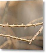 Thorny Desert Plant Inside The Desert Metal Print by Joel Sartore
