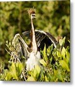 Three Tricolored Heron Egretta Tricolor Metal Print by Tim Laman
