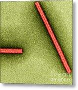 Tobacco Mosaic Virus, Tem Metal Print by Omikron