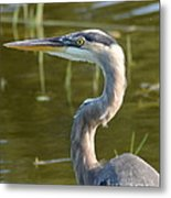 Too Close For Comfort Metal Print by Carol  Bradley