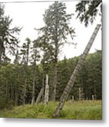 Totem Poles Stand In A Deserted Village Metal Print by Taylor S. Kennedy