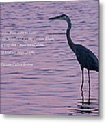 Treading Alone   Great Blue Heron  Metal Print by Jonathan Whichard