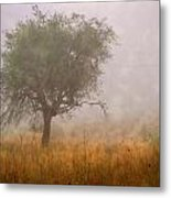 Tree In Fog Metal Print by Debra and Dave Vanderlaan