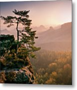 Tree In Morning Llght In Saxon Switzerland Metal Print by Andreas Wonisch