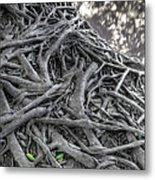 Tree Roots Metal Print by Natthawut Punyosaeng