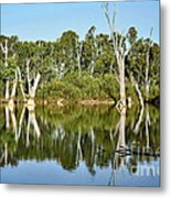 Tree Stumps In The River Metal Print by Kaye Menner