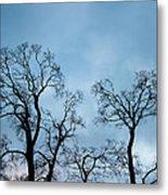 Trees. Autumn. Metal Print by Konstantin Dikovsky