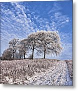 Trees In The Snow Metal Print by John Farnan