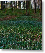 Trout Lilies On Forest Floor Metal Print by Steve Gadomski