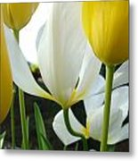 Tulip Flowers Art Prints Yellow White Tulips Floral Metal Print by Baslee Troutman