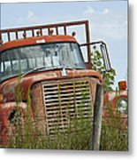 Turned Out To Pasture Metal Print by Wilma  Birdwell