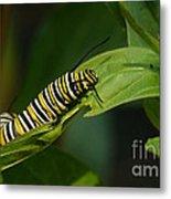 Two Caterpillars Metal Print by Steve Augustin