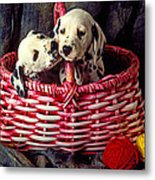 Two Dalmatian Puppies Metal Print by Garry Gay