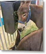 Two Donkeys Eating Metal Print by Donna Munro