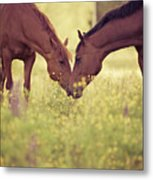 Two Horses In Field Metal Print by Stefan Sager