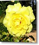 Upbeat Yellow Rose Metal Print by Will Borden